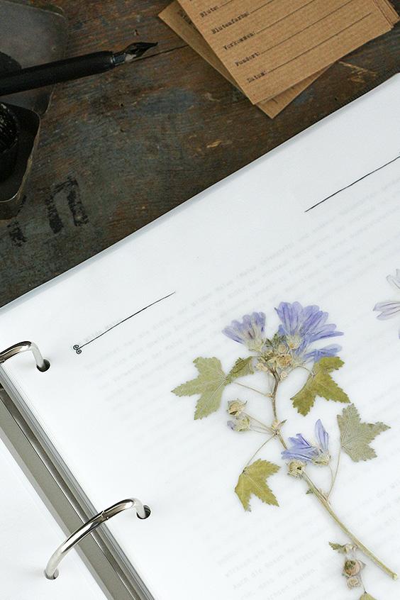 Herbarium-Shop –– Vorlagen für dein eigenes Herbarium-Projekt. Nutze unsere Herbarium-Vorlagen und erstelle dein eigenes Herbarium.