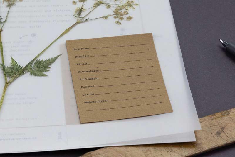 Herbarium Etiketten – Herbarium Vorlagen –– Finde die richtige Vorlage für dein Herbarium-Projekt. Nutze unsere Herbarium Vorlagen und erstelle dein eigenes Herbarium.