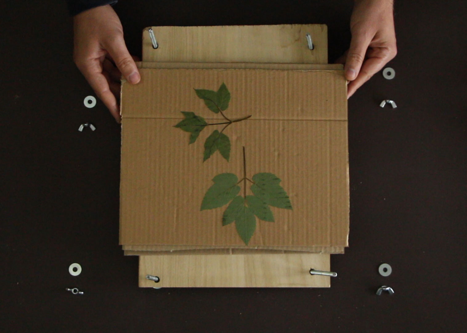 DIY Pflanzenpresse – selber bauen – Anleitung
